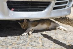 Cat in the Shade. A cat in the shade underneath a parked car in the Algarve town of Lagos in Portugal stock photos
