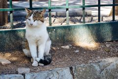 A Cat in the Shade. A cat sitting in the shadow in Delphi, Greece Royalty Free Stock Image