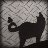Cat shadow Stock Images
