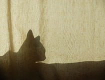 Cat Shadow on Curtain Royalty Free Stock Photos