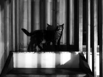 Cat_in_shadow Royalty Free Stock Photo