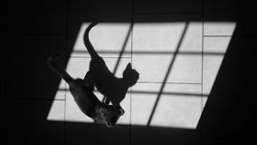 Cat and shadow. Little cat and its shadow Royalty Free Stock Photo