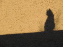 Cat in Shadow Royalty Free Stock Photo