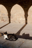 Cat and shadow resting at sunset under arcade Stock Photos