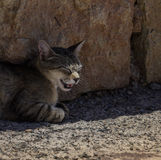 Cat in the shadow Royalty Free Stock Photos