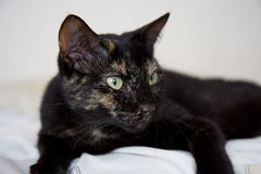 Cat with shallow depth of field. Close up of a black cat lying on pale fabric stock photo