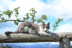 Cat Sharpening Claws en la madera imagen de archivo