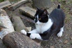 A cat Royalty Free Stock Photos