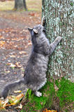 Cat sharpening its claws on a tree Royalty Free Stock Photography