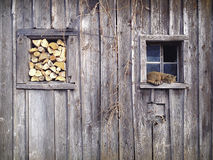 Cat Shed Royalty Free Stock Image
