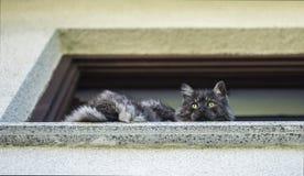 Cat on a shelf Royalty Free Stock Image