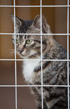 Cat shelter Royalty Free Stock Image