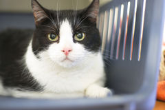 Cat in shelter. A natural portrait with shallow DOF Stock Photos