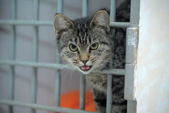 Cat in a shelter, asks to take him home Royalty Free Stock Photos