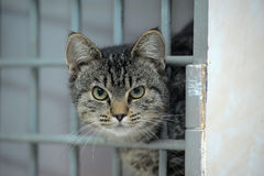 Cat in a shelter, asks to take him home Royalty Free Stock Photo