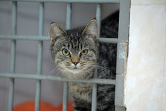 Cat in a shelter, asks to take him home Stock Photography