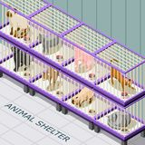 Cat Shelter Isometric Background Royalty Free Stock Photos