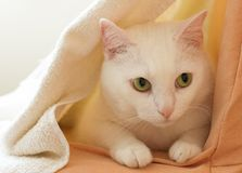 Cat in shelter Royalty Free Stock Photography