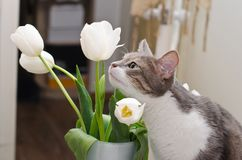 The cat shiffing tulips stock image