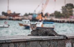 Cat and ships. stock image