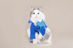 Cat in a shirt with a badge of social network Royalty Free Stock Photo