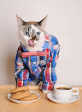 Cat in a shirt and bow tie drinking coffee with cookies and licking. Cat in a shirt and bow tie drinking morning coffee with cookies Royalty Free Stock Images