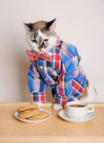 Cat in a shirt and bow tie drinking coffee with cookies. Cat in a shirt and bow tie drinking morning coffee with cookies Royalty Free Stock Images