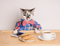 Cat in a shirt and bow tie drinking coffee at work. Cat in a shirt and bow tie drinking coffee and lookong at the phone Royalty Free Stock Photo