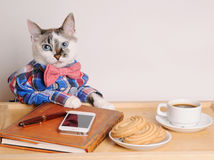 Cat in a shirt and bow tie drinking coffee at work. Cat in a shirt and bow tie drinking coffee and working remotely Stock Photography