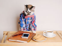 Cat in a shirt and bow tie drinking coffee at work. Cat in a shirt and bow tie drinking coffee and working remotely Stock Image