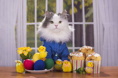 Cat shirt greets guests at Easter Royalty Free Stock Images