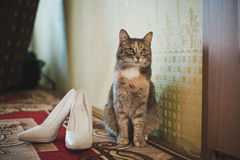 Cat and shoes. Stock Photography