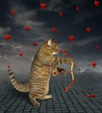 Cat shoots with an arrow 2. The cat shoots an arrow from the bow in the heart stock image