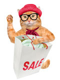 Cat Shopper Sales royalty-vrije stock afbeelding