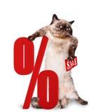 Cat Shopper Sales Fotografía de archivo libre de regalías