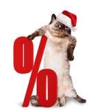 Cat Shopper Sales Fotos de archivo libres de regalías
