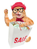 Cat. Shopper. Sales. Cat Shopper Sales. Isolated on white royalty free stock images