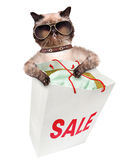 Cat. Shopper. Sales. Royalty Free Stock Photos