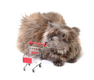Cat with Shopping Cart Royalty Free Stock Images