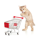 Cat with shopping cart Royalty Free Stock Photography