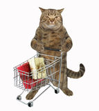 Cat with shopping cart Stock Photo