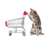 Cat with shopping trolley. isolated on white background Stock Image