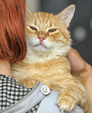 Cat on the shoulder Royalty Free Stock Photo