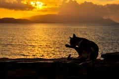 Cat in shower. This image was taken in Kusadasi, Turkey Royalty Free Stock Photo