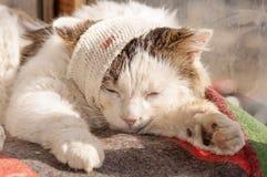 Cat sick. Cat the patient bandaged head Stock Images