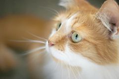 Cat side face Stock Photos