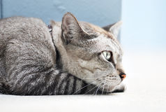 Cat Side View Stock Images