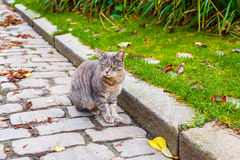 Cat on a sidewalk Stock Photography