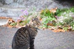 Cat on Sidewalk Royalty Free Stock Photography