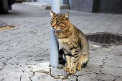 Tabby cat on the sidewalk  Stock Photos
